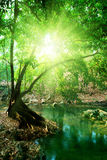 fleuve profond de forêt photographie stock