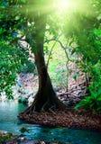 fleuve profond de forêt photos libres de droits