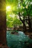 fleuve profond de forêt photo libre de droits