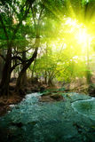 fleuve profond de forêt photographie stock libre de droits