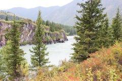fleuve Russie Sibérie de région de katun d'altai Photo stock