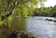 Fleuve saumoné d'été Photographie stock