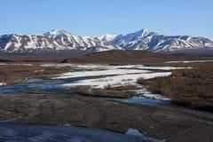 Fleuve sauvage au printemps, stationnement national de Denali Images libres de droits