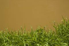 Fleuve souillé Photos libres de droits