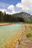 Fleuve vermeil chez Kootenay NP, Canada Image stock