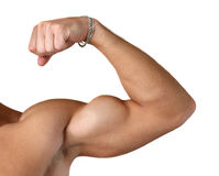 Flexed Biceps Isolated on White Royalty Free Stock Image