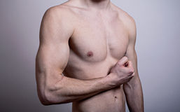 Flexed male biceps Stock Image