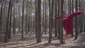 Flexibele jonge vrouw in rode kleding die in de bos Mooie dame wat betreft een boom dansen Concept vrouwelijke tederheid stock footage