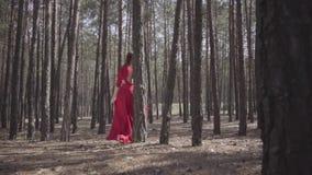 Flexibele leuke vrouw in rode kleding die in de bos Mooie dame wat betreft een boom dansen Concept vrouwelijke tederheid en stock video