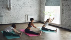 Flexible girls are doing yoga practicing wide-angle seated forward bend in loft style studio with white walls and large. Flexible girls are doing yoga practicing stock footage
