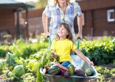 Flicka för litet barn inom skottkärran med grönsaker i trädgården Royaltyfria Bilder