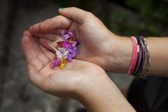 Flicka händer som rymmer vildblommar Fotografering för Bildbyråer
