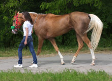 flicka henne häst Arkivbild