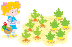 Flicka i en grönsakträdgård Royaltyfria Foton