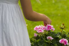 Flicka i en klänning som väljer blommor royaltyfri foto