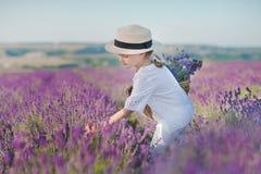 Flicka i en sugrörhatt i ett fält av lavendel med en korg av lavendel En flicka i ett lavendelfält Flicka med en bukett av lavend Arkivbild