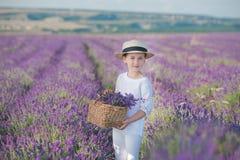 Flicka i en sugrörhatt i ett fält av lavendel med en korg av lavendel En flicka i ett lavendelfält Flicka med en bukett av lavend Royaltyfri Foto