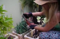 Flicka i fruktträdgård 5 Arkivbild