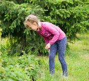 Flicka i trädgårds- plockningjordgubbar Arkivfoto