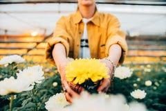 Flicka i växthus Fotografering för Bildbyråer