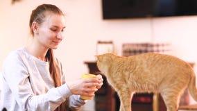 Flicka i varm tröja som dricker kaffe med den röda katten på hennes varv i kattkafé arkivfilmer
