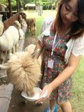 Flicka med Alpaca Royaltyfri Foto