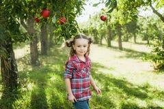 Flicka med Apple i den Apple fruktträdgården Royaltyfri Foto
