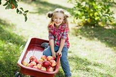 Flicka med Apple i den Apple fruktträdgården Arkivfoton