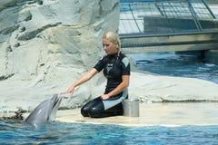 Flicka med en delfin under en show Fotografering för Bildbyråer
