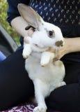 Flicka med en kaninkanin arkivbilder