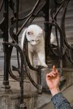 Flicka med en katt för alltid vänner arkivfoto