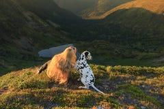 Flicka med ett hundsammanträde på en vagga på sjön arkivfoto