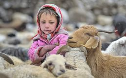 Flicka med ett purpurfärgat omslag från den övreShimshal byn Arkivfoto