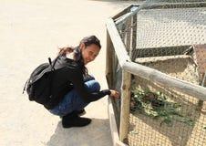 Flicka med försökskaniner Arkivfoto