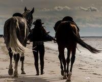 Flicka med hästar Arkivfoton