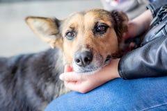 Flicka med hennes älskade hund Flickan smeker den sjuka dog_en arkivbilder