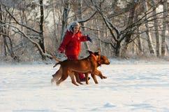 Flicka med hennes hundkapplöpning i snö Arkivfoto