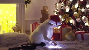 Flicka med minnestavlan nära julgranen arkivfilmer