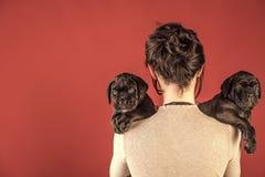 Flicka med svarta mastiffar Rottingcorsovalp på den kvinnliga handen Royaltyfria Bilder
