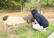 Flicka med svin Fotografering för Bildbyråer