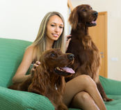 Flicka med två irländska setter hemma Royaltyfri Bild