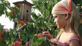 Flicka och aprikors arkivfilmer
