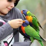 Flicka och fåglar Royaltyfri Bild