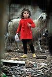 Flicka och får i Palestina Ramallah Royaltyfri Foto