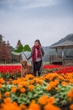 Flicka och golden retriever i blommorna Fotografering för Bildbyråer