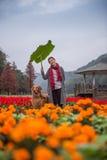 Flicka och golden retriever i blommorna Arkivbild