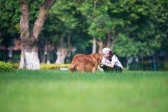 Flicka och golden retriever som spelar i gräset arkivfoton