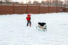 Flicka och hund som sledding i trädgård Arkivbilder