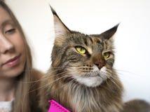 Flicka och katt royaltyfri foto