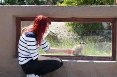 Flicka och meerkats Royaltyfria Bilder